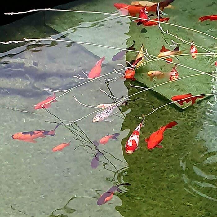 Fish Health Christchurch